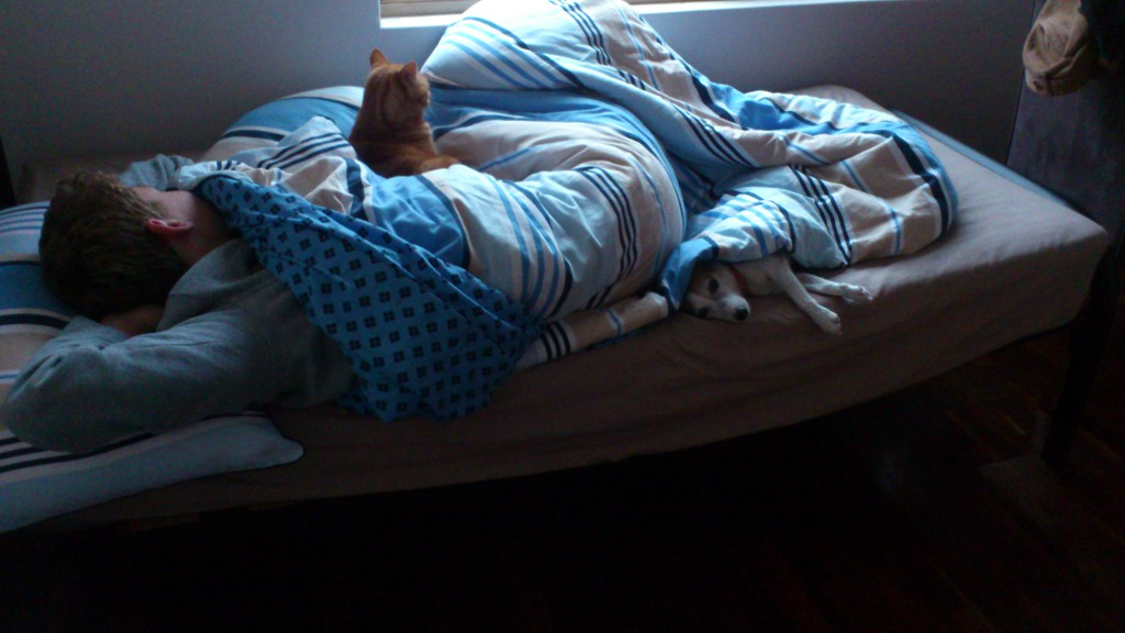 Ginger and Tinks on Tim's bed